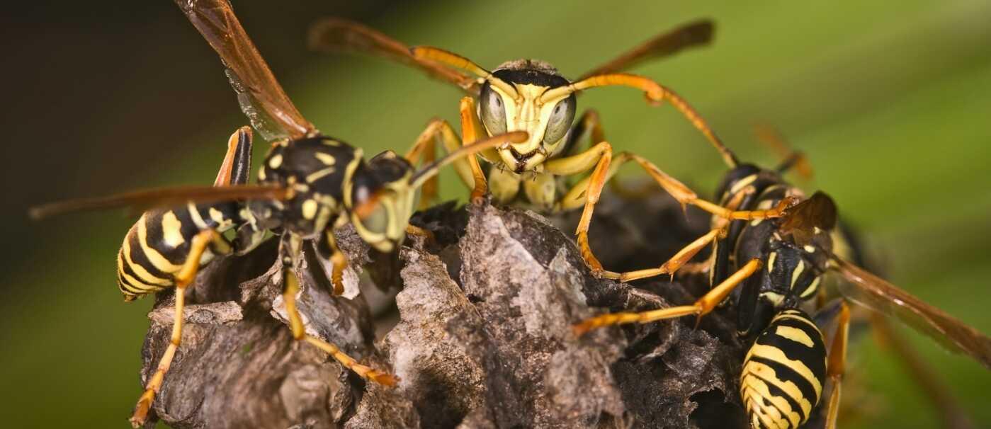 wasps-trunk-(1)_optimized